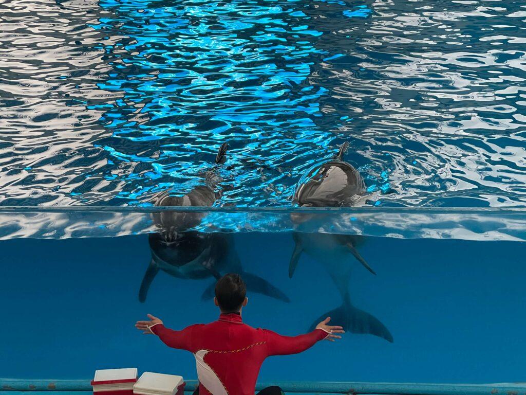超可愛的表演~我好想摸摸看海豚